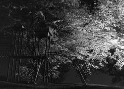 sakura_mibiyakei_002.jpg