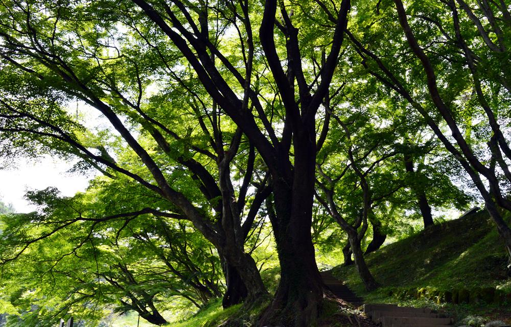 http://maywind.sakura.ne.jp/onsen/onsenblog/img/sakuyama_2014_07_002.jpg