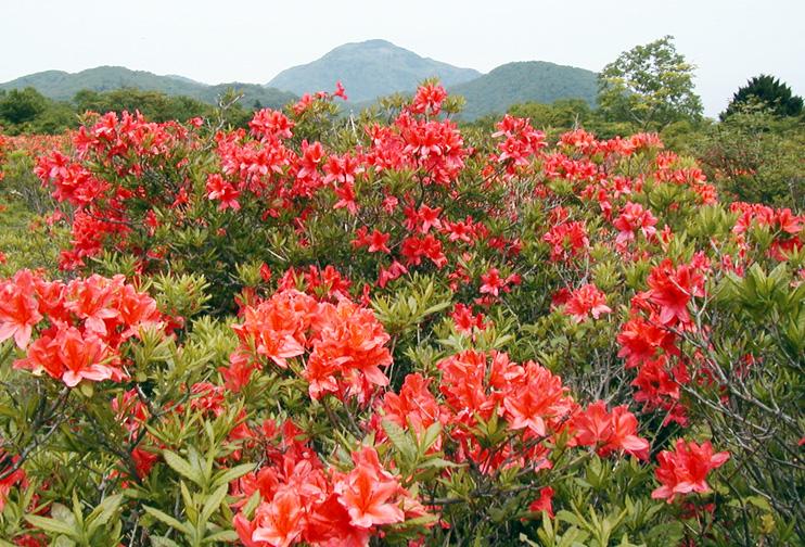 http://maywind.sakura.ne.jp/onsen/onsenblog/img/umtutuji_01.jpg